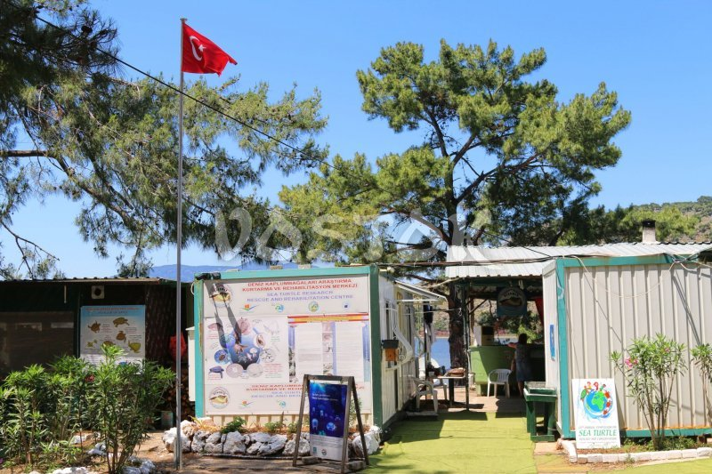 Here is how Dalyan Turtle Hospital and Rescue Centre looks