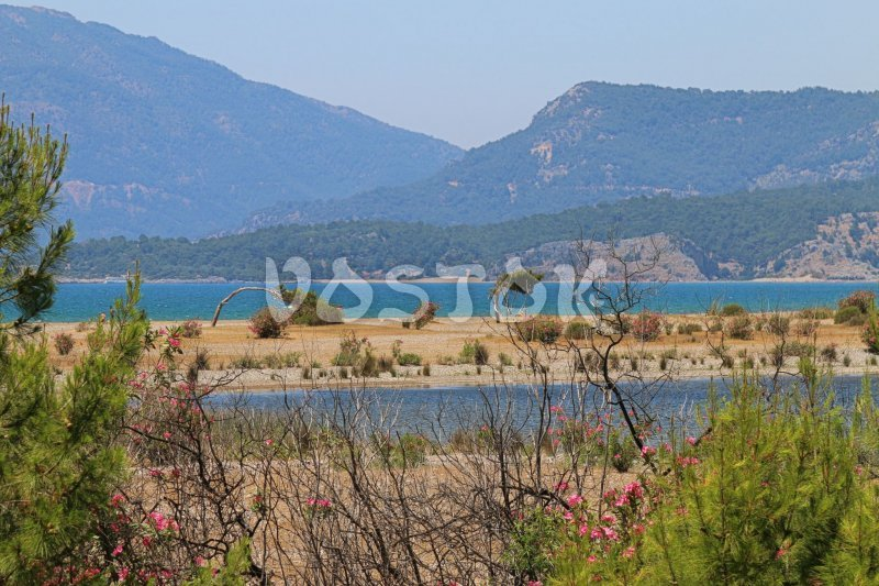 Iztuzu Beach near Dalyan Turkey