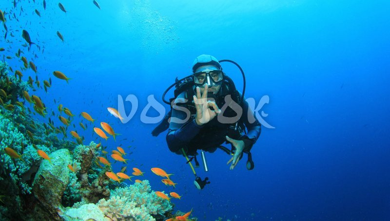While scuba diving time you get great opportunity to discover underwater world