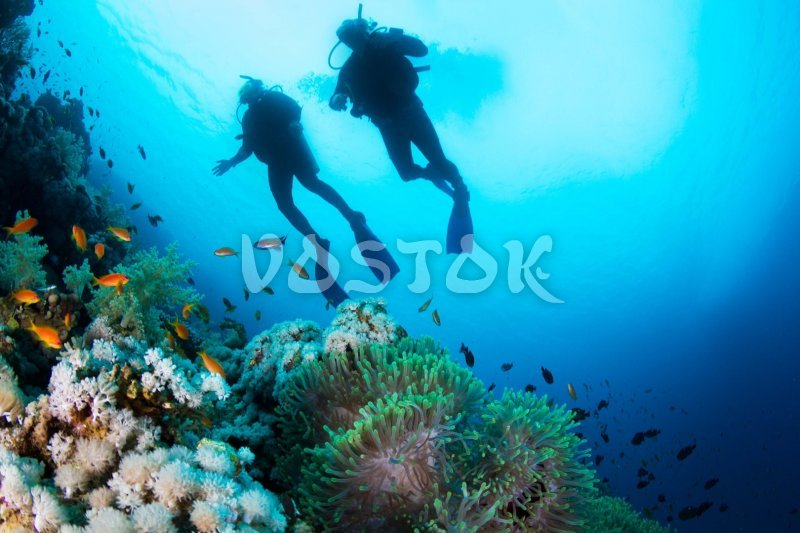 Do you find scuba diving romantic activity?