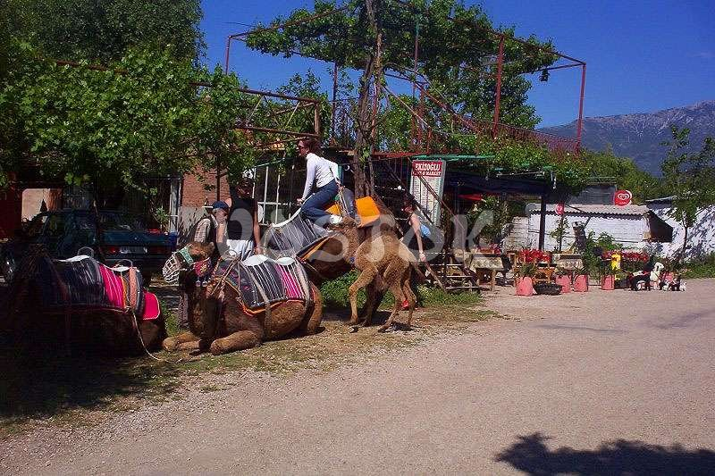 We are getting prepared for camel ride in Kayakoy - Turkey Camel Rides