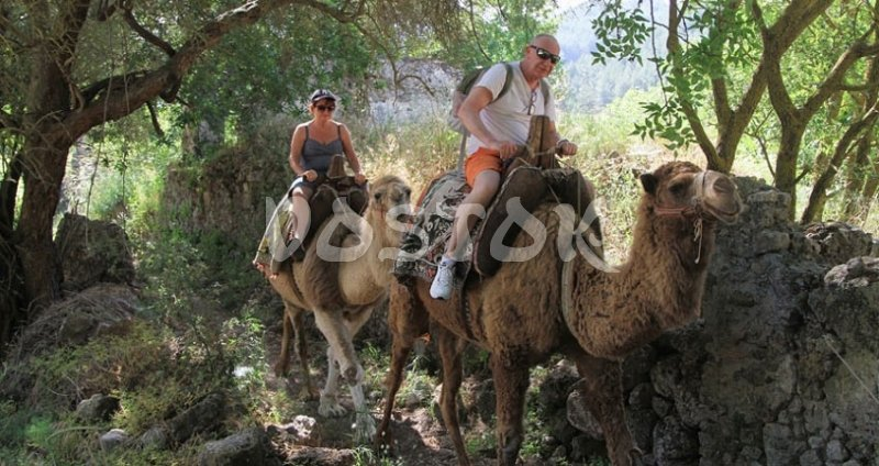 Camel trekking through forests near Kayakoy ghost town