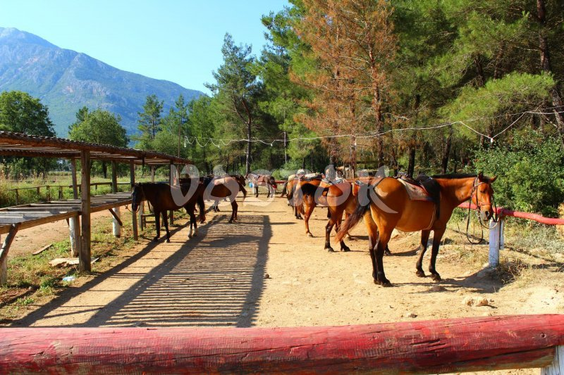 Our horses are relaxing in their stables waiting for guests to come - horse riding near Oludeniz