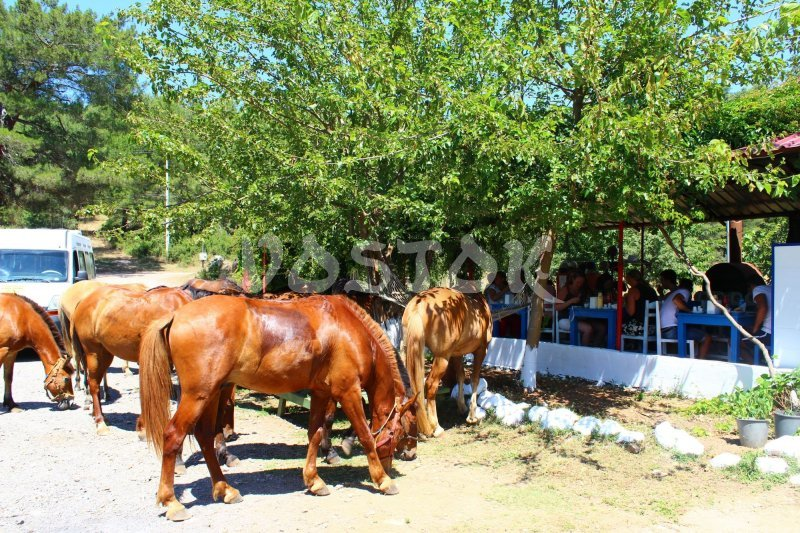 Tea break in Kayakoy - horse riding Oludeniz